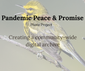 Pandemic Peace & Promise Photo Project. Creating a community-wide digital archive. Background: small green and grey prarie warbler perched on bare branch.